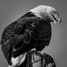 by Ron Meyers - Black & White Animals