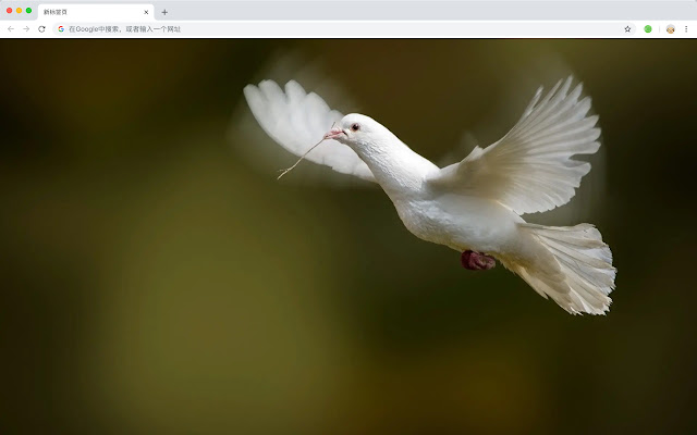 Dove New Tab Page HD Wallpapers Themes