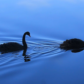 by Anthony Rutter - Novices Only Wildlife