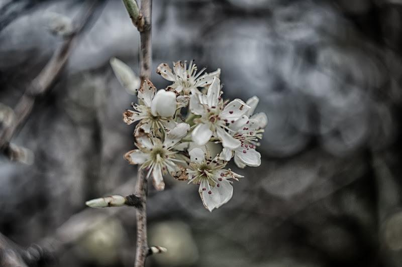 Primavera...in Helios di 2015 Marco Cristiano