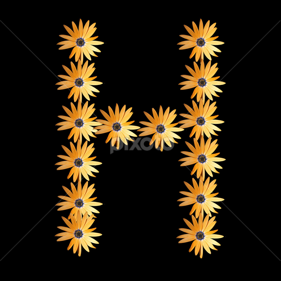 The English ALphabet H by Dipali S - Typography Words ( abstract, orange, creation, font, illustration, wallpaper, daisy, print, h, pattern, artistic, alphabet, typography, english, design, flower )