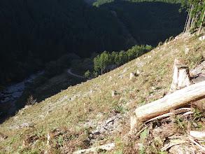 伐採斜面を横切りながら降りる