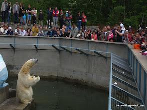 Photo: The crowd feeds a polar bear At the Novosibirsk zoo