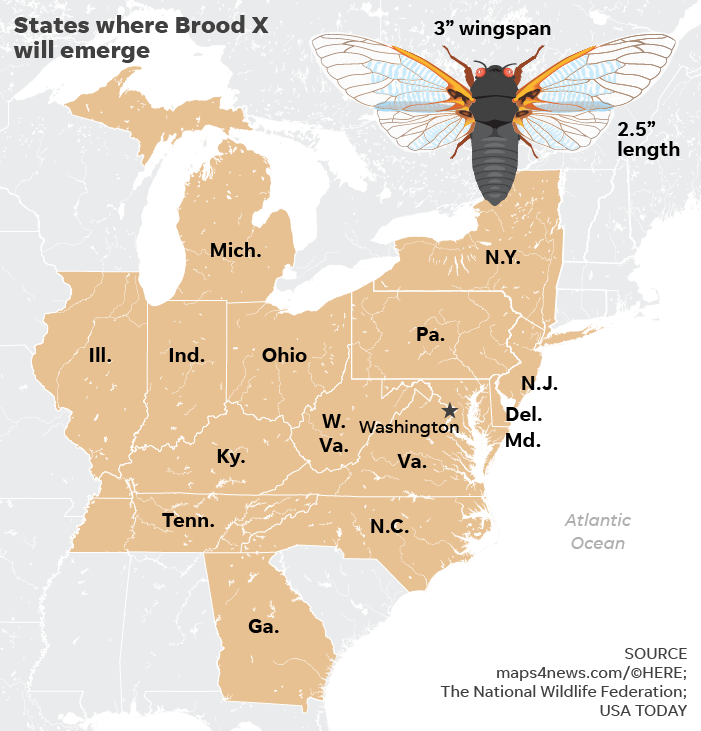 Cicadas to reemerge in US for first time in 17 years