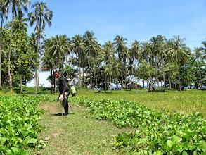 Photo: Walking through rice fields to a dive site in Hilapnitan