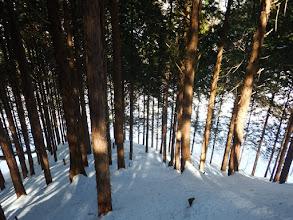 末端は植林