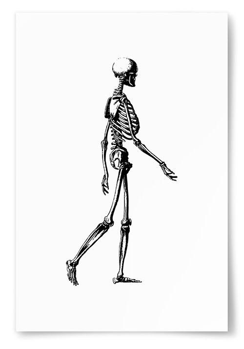 Poster Skelett Sida