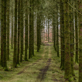 Straight Side By Side by Marco Bertamé - Landscapes Forests ( forest, green, trees )