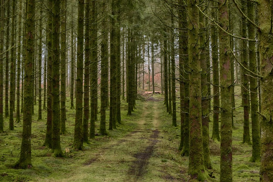 Straight Side By Side by Marco Bertamé - Landscapes Forests ( forest, green, trees,  )