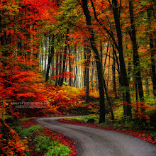 """Photo: Hi G+  """"Coloured Road"""" new post in the Fall album. You can easily buy a print of my photographs on Big Great Canvas http://bit.ly/tx61NW  REMINDER Best of Autumn 2011 - New ebook Version 2 !!! http://www.naturephotographie.com/best-of-automne-2011/ Best of Landscape Photographers (for inspiration) : http://www.naturephotographie.com/photographes-du-monde/  Happy weekend - and thanks for your support here on G+  #fallphotos #autumnphotography #naturephotography #photography #forestphoto"""