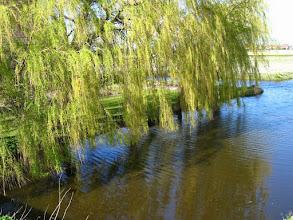 Photo: #009-Les champs de jacinthes dans les environs de Lisse.
