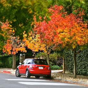 Taking a walk on Finger Street by Victoria Eversole - City,  Street & Park  Neighborhoods ( autumn, red leaves, trees, sporty )