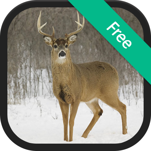 Deer Sounds and Ringtones