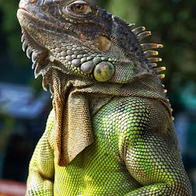 by Harry Patriantono - Animals Reptiles