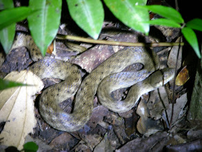 Photo: A snake in the night, harmless