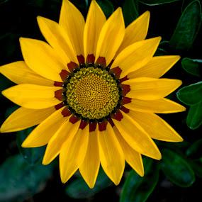 Beautiful winter flowers  by Basant Malviya - Flowers Single Flower ( nature, winter, blosom, flower )