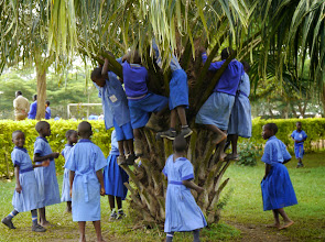 Photo: School children looking for fruits in a tree