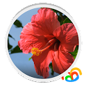 Flor Roja Real Live Wallpaper icon