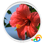Real Red Flower Live Wallpaper icon