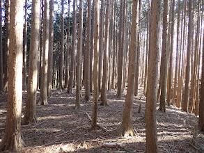 植林帯となり藪が無くなる