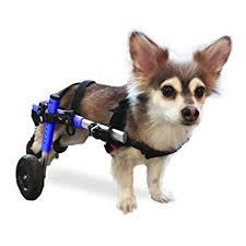 Image result for crippled puppy
