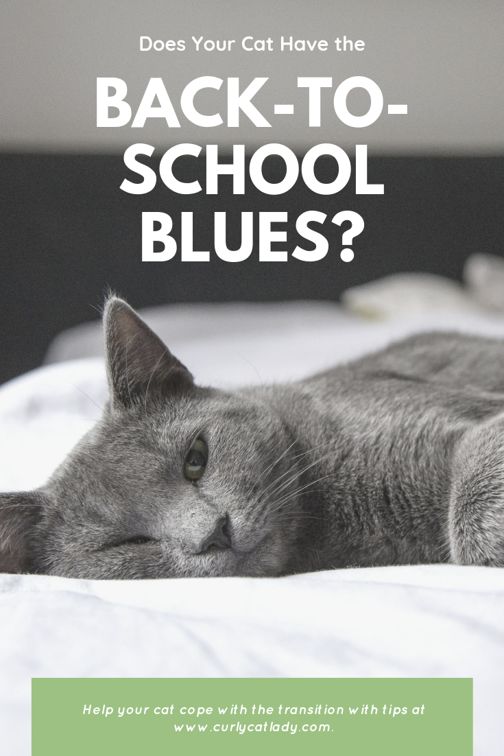 Does your cat have the back-to-school blues?