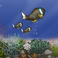 Fish Tycoon Lite icon