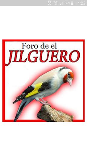 Foro de el Jilguero