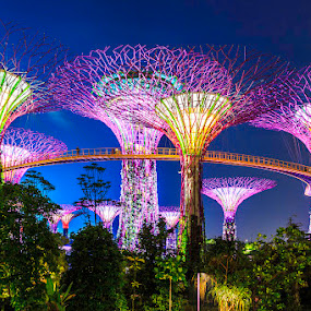 Gardens By The Bay by CK Lam - City,  Street & Park  City Parks ( park, gardens by the bay, supertree grove, singapore, marina bay )