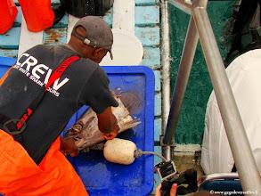 Photo: #004-Préparation de la mixture et de l'appât pour le Grand requin blanc.