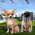 Chihuahua Dog Friends Simulator : Cute Dog Sweetie