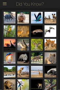 Did you know… African Wildlife- screenshot thumbnail