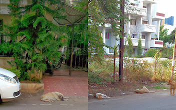 Photo: The Doggies I met in Viman Nagar this afternoon. October heat seems to be quite beating them. There was also a doggy colleague in the company I visited today named Charlie-kun. 29th October updated -http://jp.asksiddhi.in/daily_detail.php?id=346