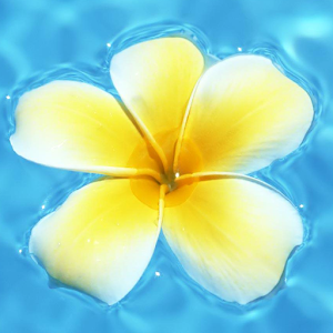 flower floating on water lwp apk