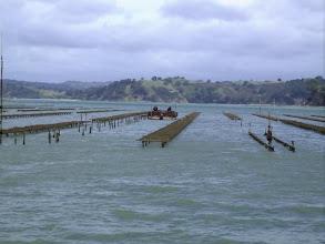 Photo: ...my job, the oysterfarm...