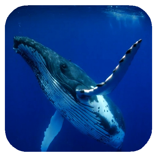 Whale 3d Video Wallpaper Apps On Google Play