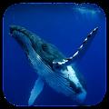 Whale 3D. Video wallpaper APK