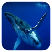Whale 3D. Video wallpaper