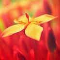 LWP Красивые Цветы icon