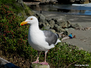 Photo: (Year 2) Day 357 - Jonathan Livingstone Seagull