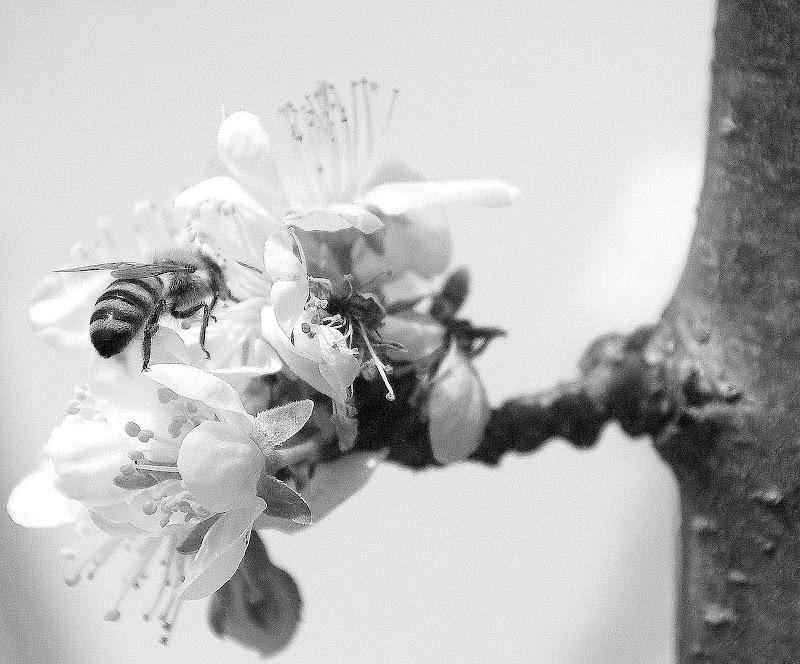L'ape ed il fiore di Luciano Fontebasso