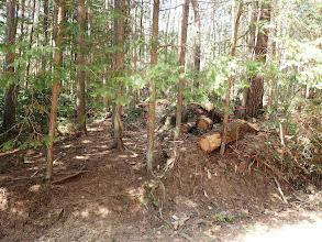 林道終点で右の尾根に取り付くが