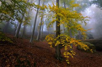 Photo: #landscapephotography curated by +Margaret Tompkins, +Ke Zeng, +David Heath Williamsand +paul t beard +HQSP Landscape #hqsplandscape  #1000photographersaroundtheworld +10000 PHOTOGRAPHERS around the Worldby +Robert SKREINERand +Walter Soestbergen #photoplusextract  #landscape  #germany  #saxony  #naturemonday  #nationalparksmonday  #saxonswitzerland