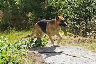 Foto: Här kommer Niska...