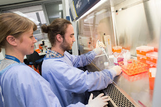Photo: Dr Emma Toulmin (Research Officer) with Honours student Mr Andrej Terzic. Lab link: http://www.acbd.monash.org/research/stem-cell.html