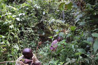 Photo: Inside the forests... surrounded by seyafu (driver ants), giant stinking nettle, and elephants... time to leave!!!