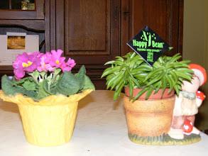 szülinapi virágok képek Album Archive   Szülinapi virágok szülinapi virágok képek