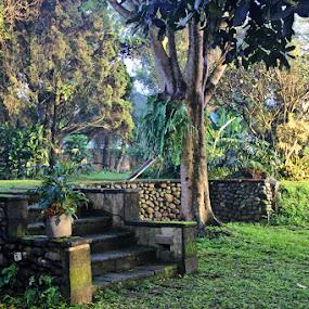 the garden by Philips Onggowidjaja - Uncategorized All Uncategorized