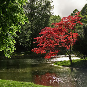 by Oleksii Liebiediev - City,  Street & Park  City Parks ( munchen, english garden, park, germany, city park,  )