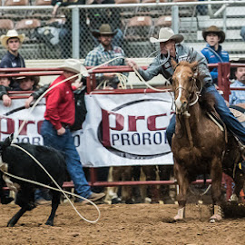 Calf Roping by Christopher Winston - Sports & Fitness Rodeo/Bull Riding ( cowboy, roping, skill, calf, texas, competition, animal )